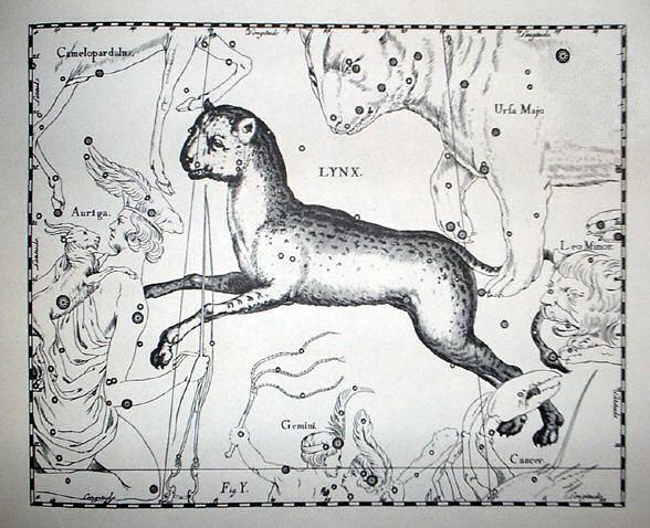 Созвездие Рысь в Атласе звёздного неба Яна Гевелия.