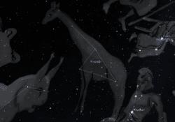 Созвездие Жираф