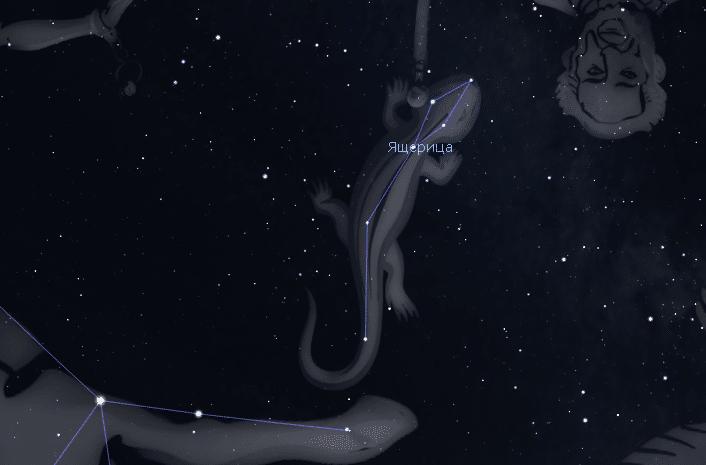 Созвездие Ящерица