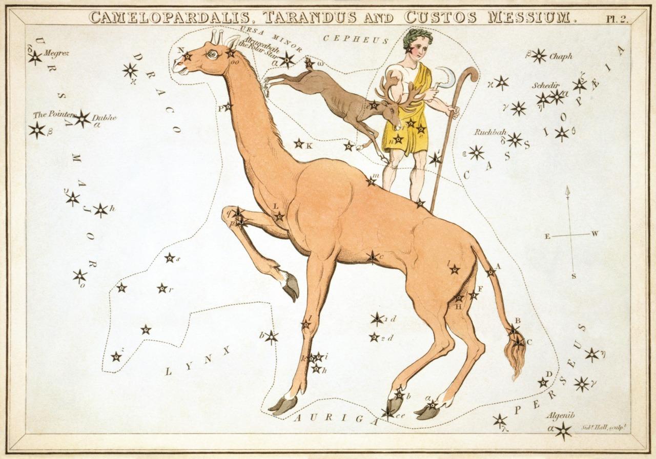 Жираф, изображённый в «Зеркало Урании», набор созвездий карт, опубликованных в Лондоне около 1825. Выше приведены ныне брошенные созвездия Северный Олень и Хранитель Урожая.