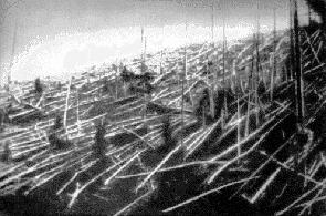 Поваленные деревья на Тунгуске, 1927