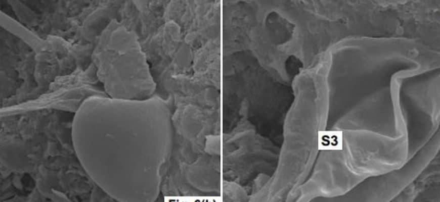 Найдены окаменелости в метеоритах