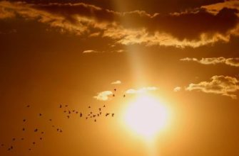 Сколько лет Солнцу