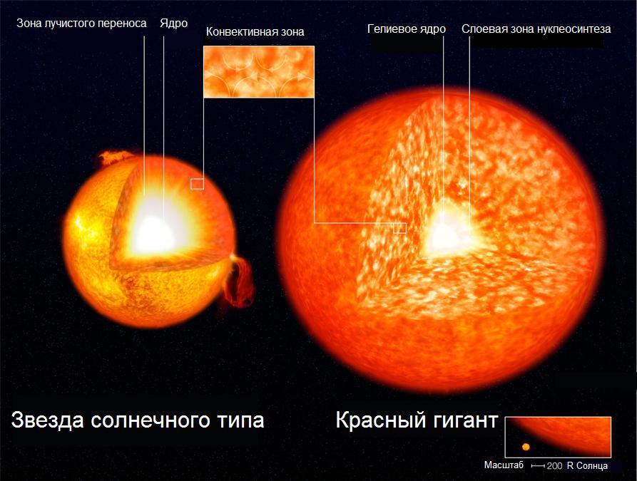 Строение звезды главной последовательности солнечного типа и красного гиганта с изотермическим гелиевым ядром и слоевой зоной нуклеосинтеза (масштаб не соблюдён)
